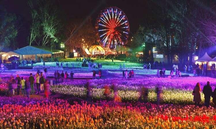 Lễ hộihoa Floriade với ánh đèn tráng lệ tạo nên bức tranh huyền ảo khó cưỡng