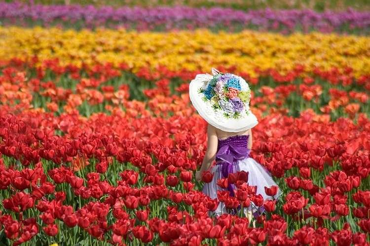 Rực rỡ sắc hoa tulip