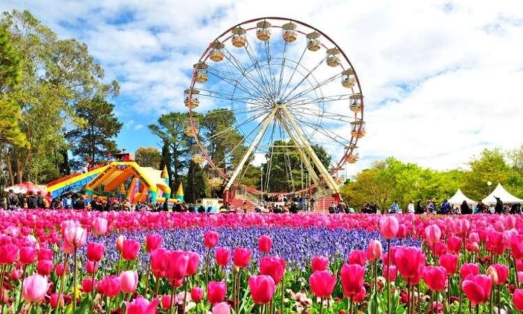 """Lễ hội hoa Floriade ở Úc: Lễ hội """"thần tiên"""" kéo dài nhất Australia"""