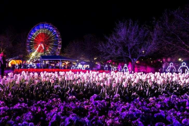Lễ hội hoa Floriade ở Úc vào ban đêm