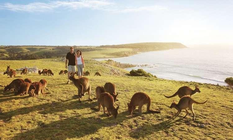 Khám phá du lịch đảo Kangaroo Úc lớn gấp 4 lần Hongkong