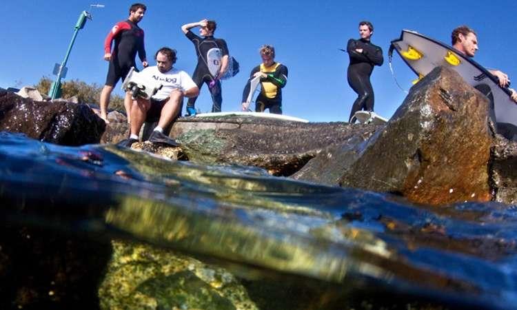 Xem cá voi vào mùa đông Gold Coast