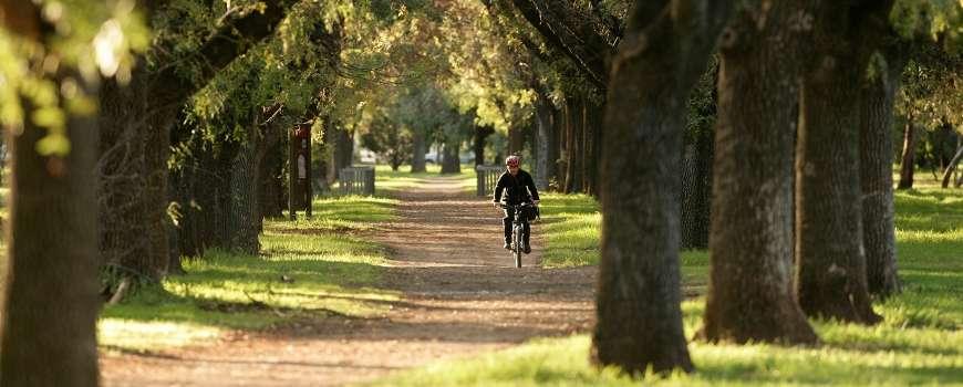 Thành phố được bao trùm bởi vô số công viên