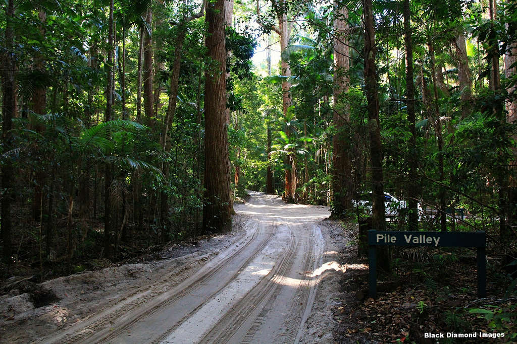 Cánh rừng Santinay