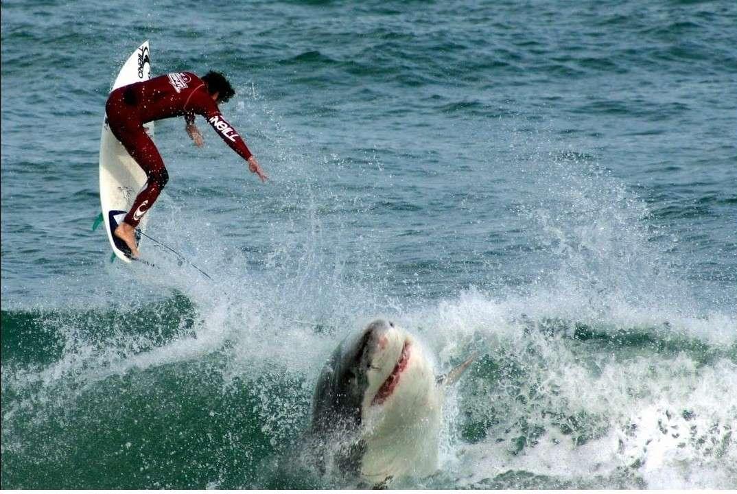 Lướt sóng là môn thể thao được yêu thích tại Hyams Beach Australia