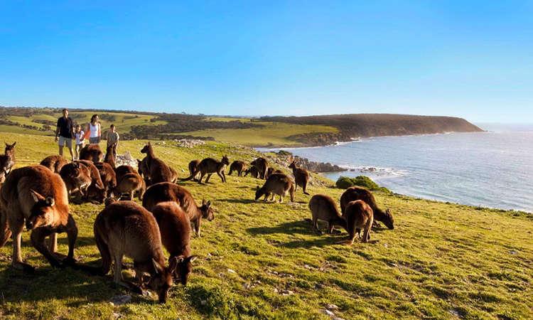 Đảo Kangaroo