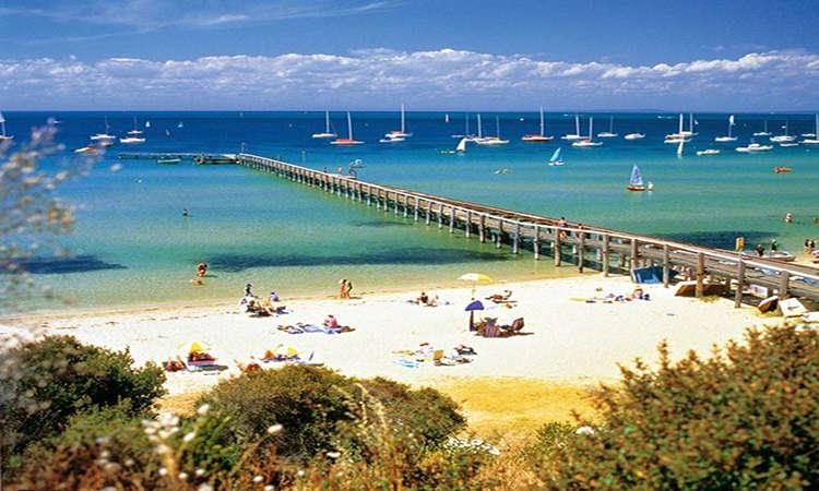 Ngao du bán đảo Mornington Beach Australia