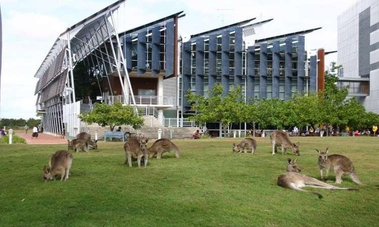 University of Sunshine Coast Australia: Học phí, điều kiện, ngành học