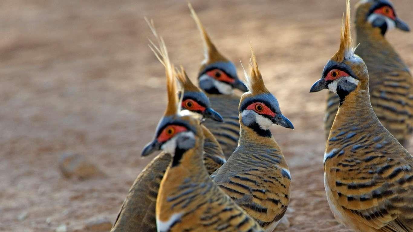Công viên tập hợp nhiều loài chim độc đáo, quý hiếm