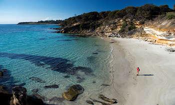 Thăm thú đảo Maria island Tasmania Úc - Thiên đường nghỉ dưỡng khó quên