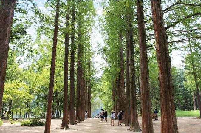 Đảo Nami thơ mộng lãng mạn, điểm du lịch nổi tiếng ở Hàn Quốc