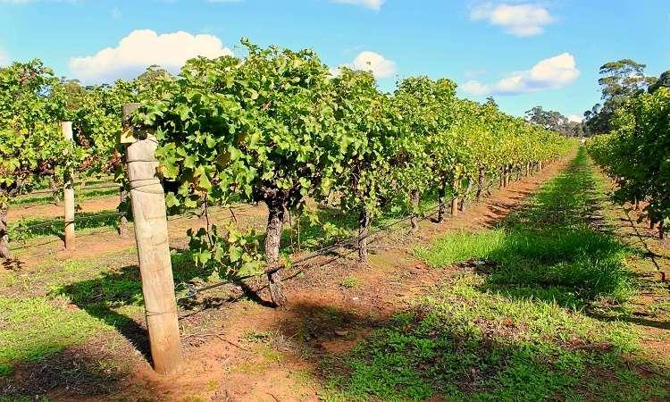 Mua trang trại ở Úc nên đầu tư ở đâu tiềm năng sinh lời?