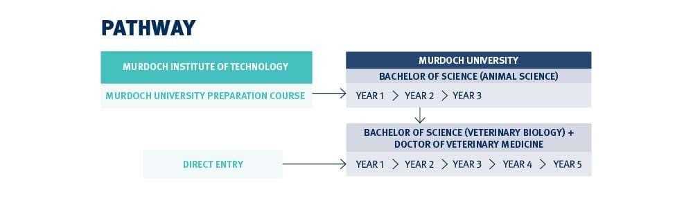 Lộ trình học ngành bác sĩ thú y ở Học viện công nghệ Murdoch Úc